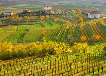 Vinmarker i Friuli-Venezia Giulia